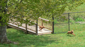 Boonedogpark