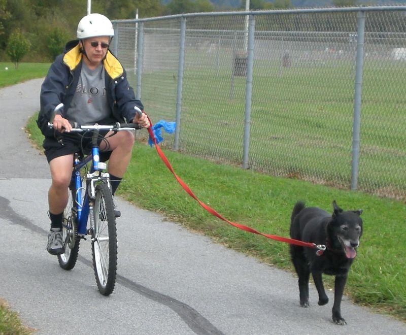 Biking with your dog-1