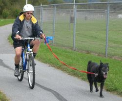 Biking with your dog-1