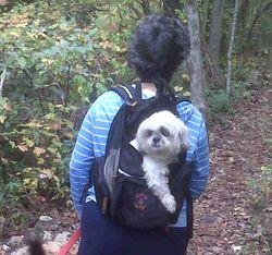 Doginbackpack