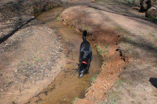 Cinder-dogparkcreek