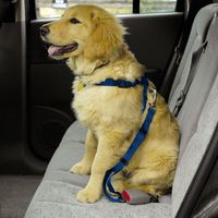 Dog-harness