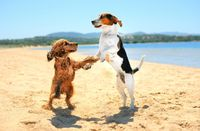 Dancingdogs