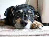 Dogwithglasses