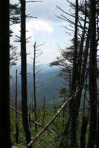 Mtmitchell-0809 trees