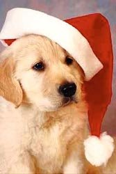 Christmas_puppy