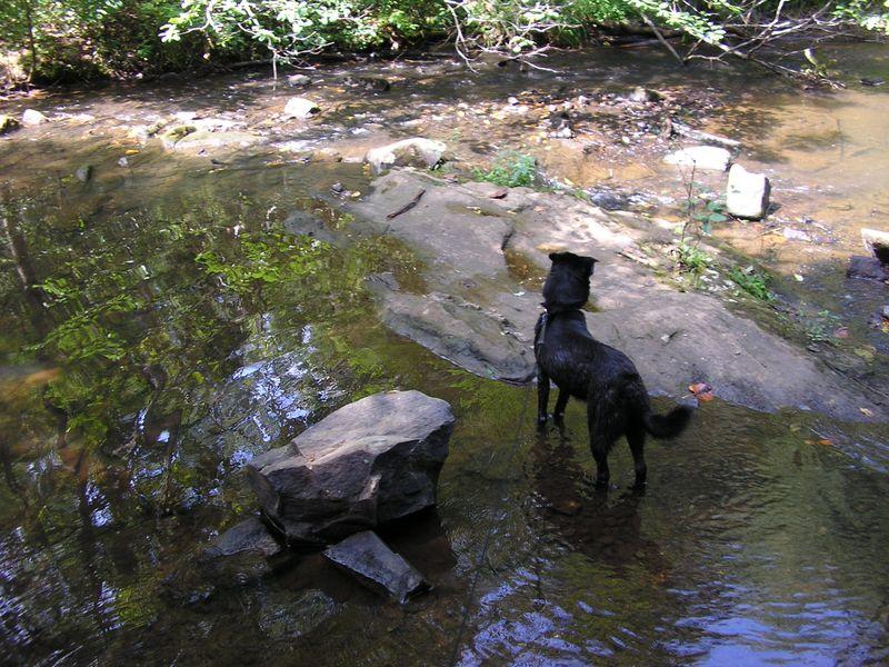 Cinder in bent creek