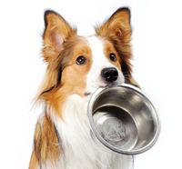 Dog-food-image