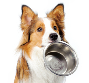 Dog-food-image