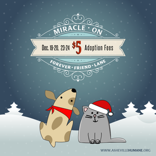 Miracle on Forever Friend Lane