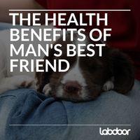 Dog_Best_Friend_LabDoor
