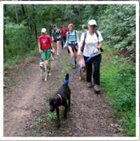 Hiking hounds