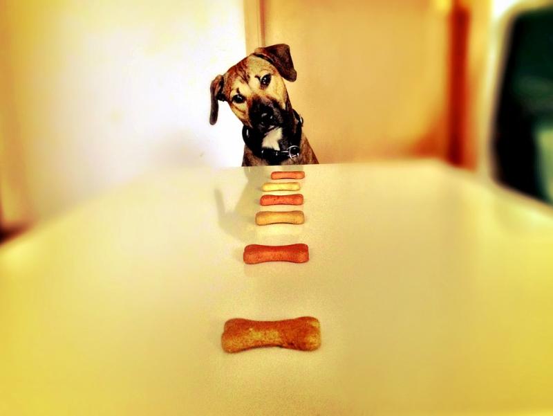 3 Baked Doggy Treats