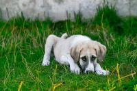 Dog-2723108_640
