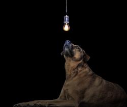 Dog-3435827_1920