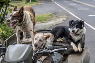 Dogs-4477058_1920